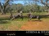ATHENA E TITANIA L'INFANZIA
