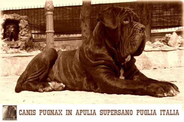 canis-pugnax-supersano_0