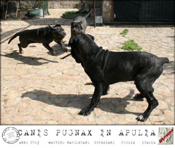 saturnia-5