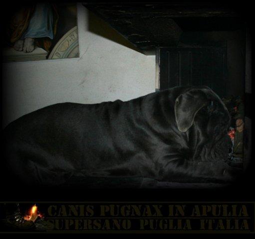 il-camino-3