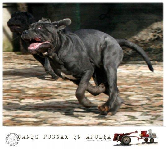 run-baby