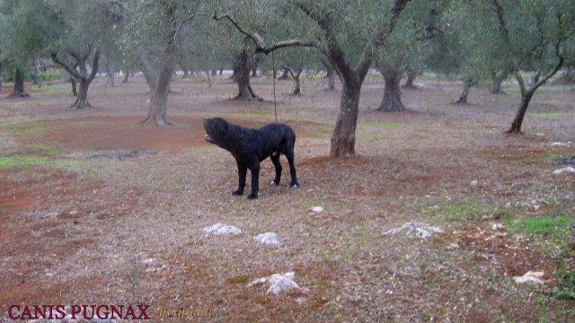 black devil maciste