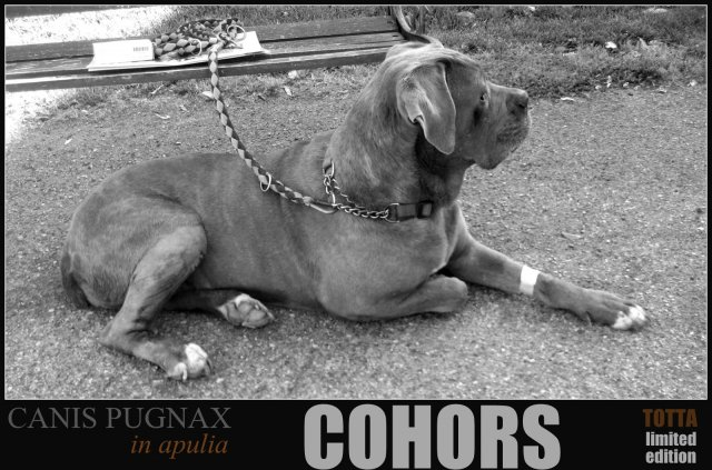 cohors