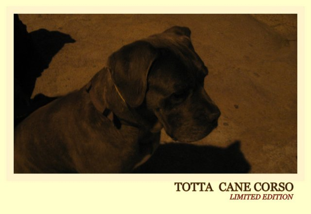 totta-limited-edition_0
