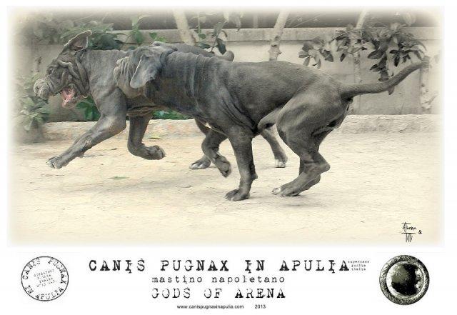 canis-pugnax-style