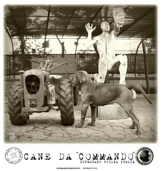 commando-1