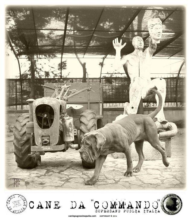 commando-4