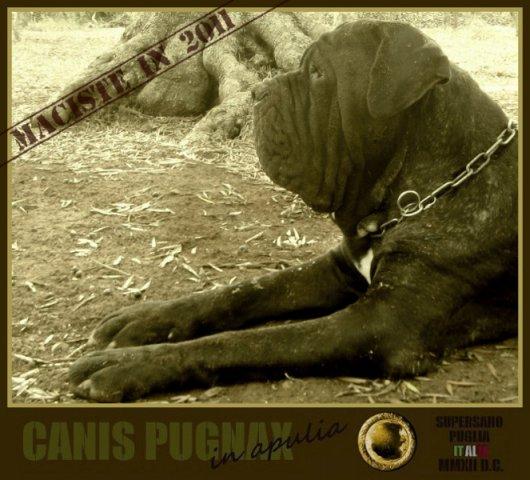 1-camaleontemessapico2011