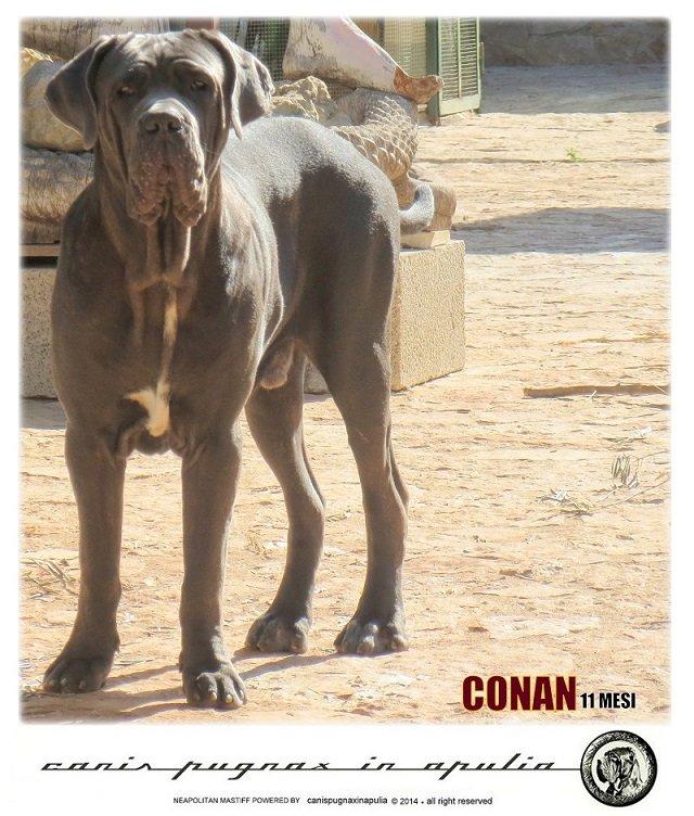 conan-11-mesi-3