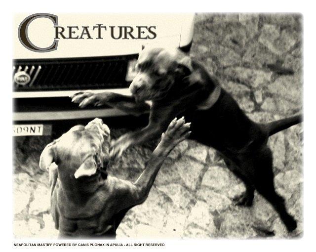 le-creature