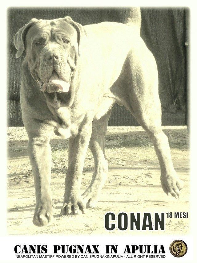 conan-18-mesi
