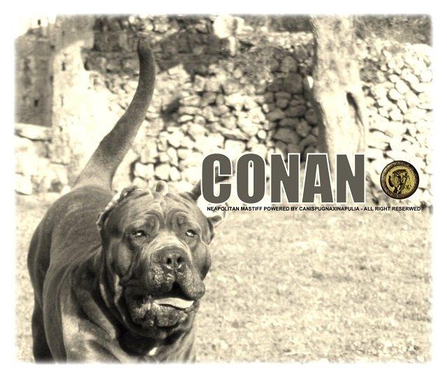 conan-18-months