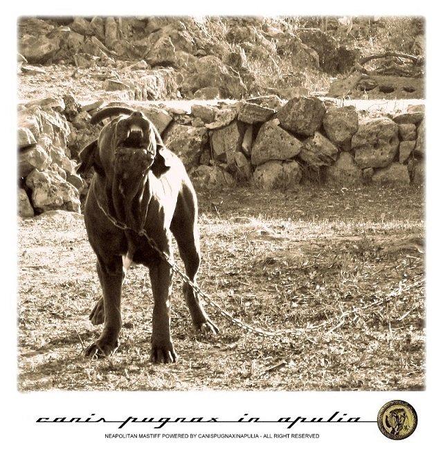 cane-da-catena