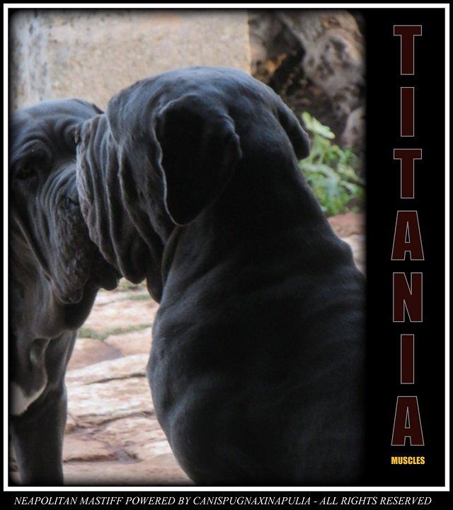titti-2