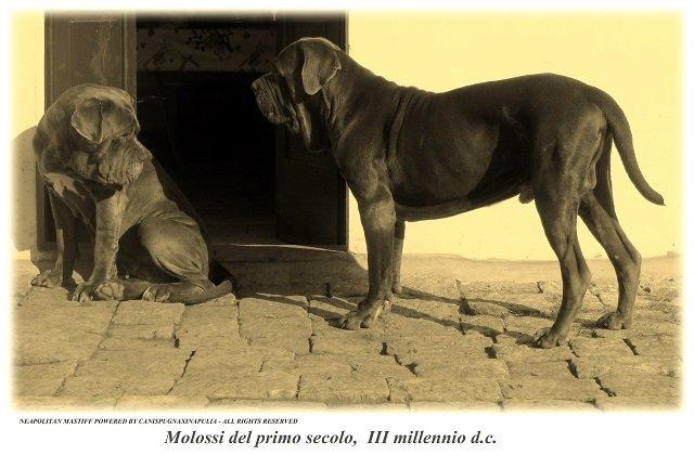 molossi-del-terzo-millennio-2
