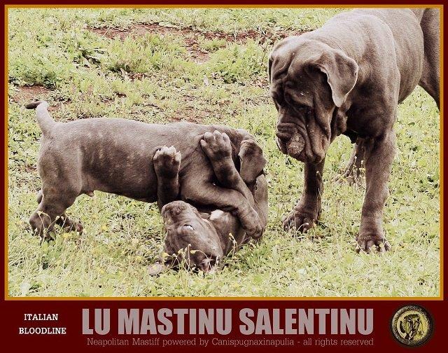 lu-mastinu-salentinu-17