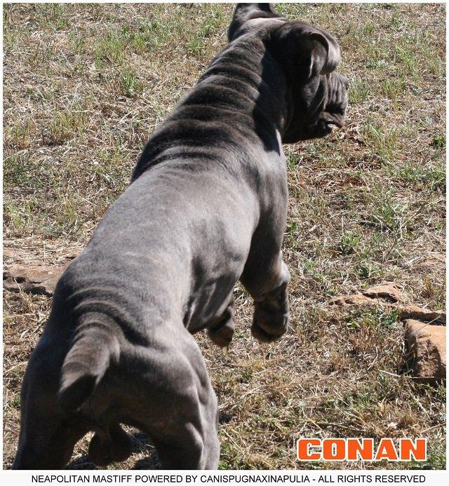 conan-el-gigante-2