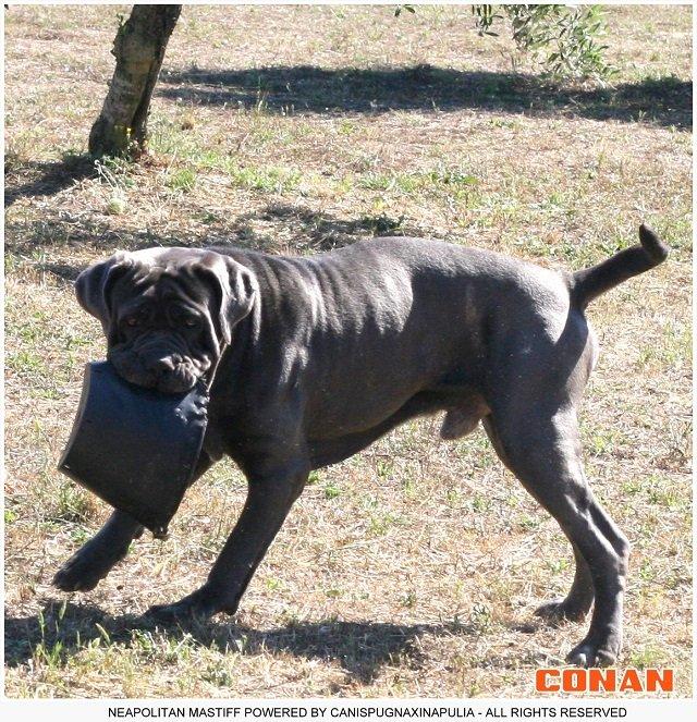 conan-el-gigante-8