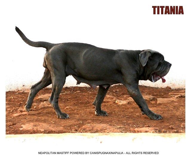 doggod-2