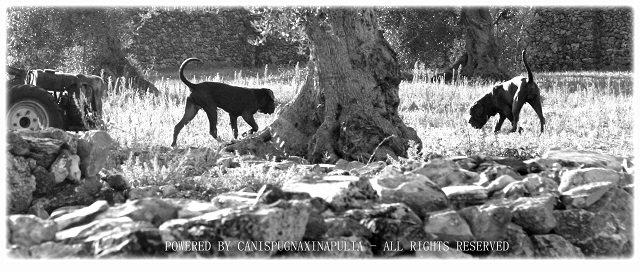 i-cani-della-papessa