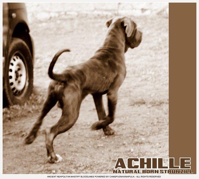 achille_0