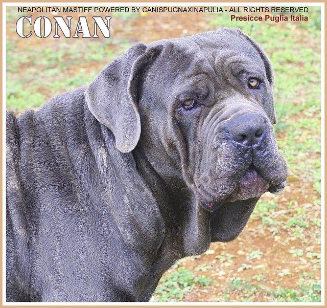 conan-15