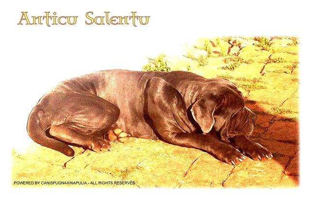 anticu-sallentu-1