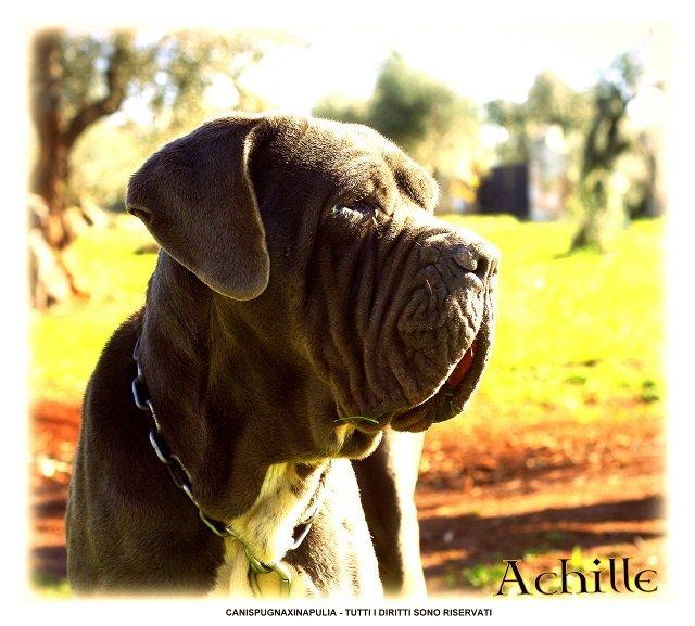 achjlle