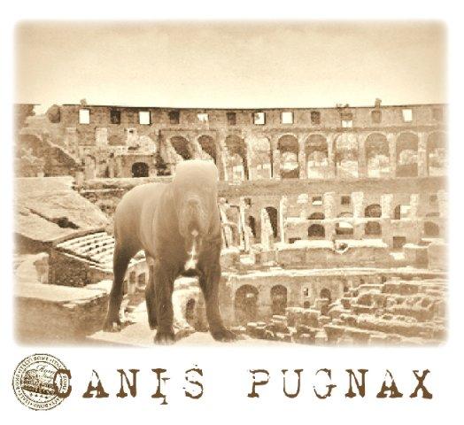 canis-pugnax