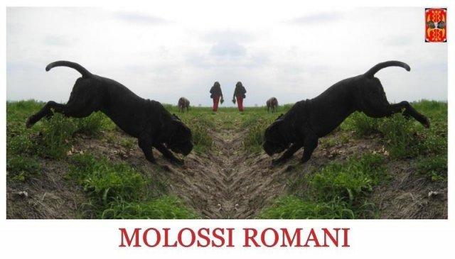 molossiromani