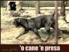 il-passo-del-giaguaro