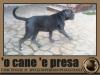 il-passo-del-leone
