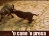 O' CANE 'E PRESA