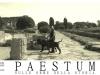 mastino-napoletano-a-paestum-4