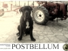 neapolitan-mastiff-traktor